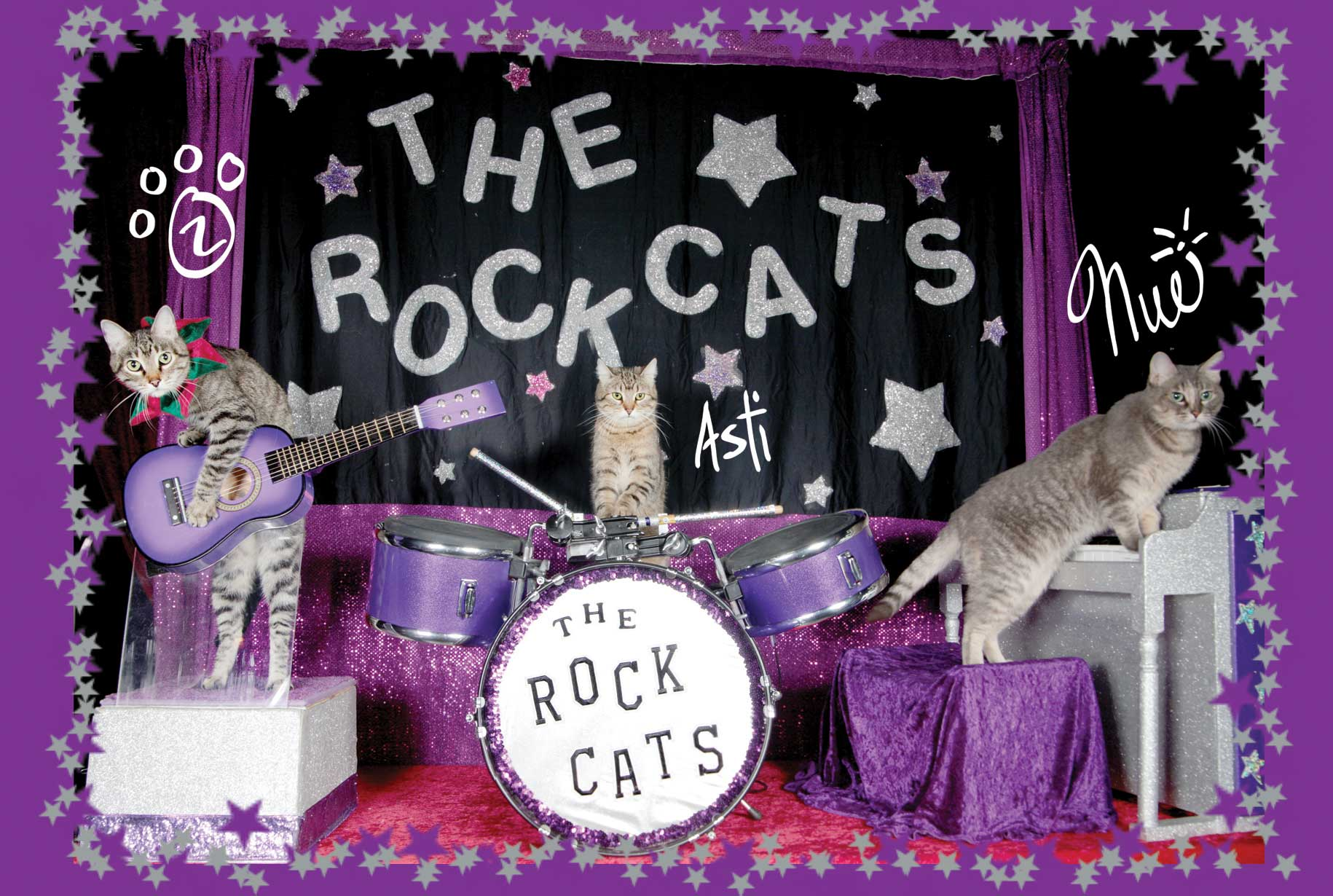 The Amazing Acro-cats in Mew Orleans! - Theatre at St Claude
